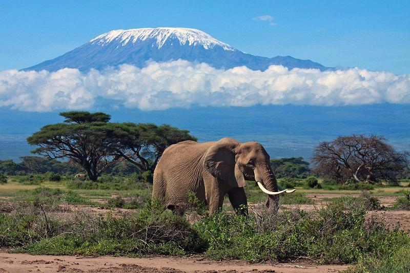 слон на фоне горы килиманджаро