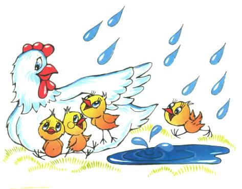 В дождь, Барто, курица наседка под дождем иллюстрация