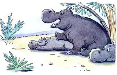 бегемоты лежат на берегу