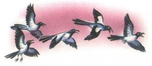 сороки летят по небу