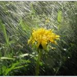Ливень, Барто, стихотворение про дождь