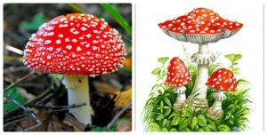 Ядовитые грибы, лес, мухомор