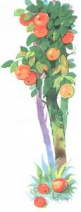 Осина с апельсинами