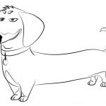 Раскраска Тайная жизнь домашних животных, Бадди