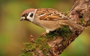 Птица воробей сидит на ветке