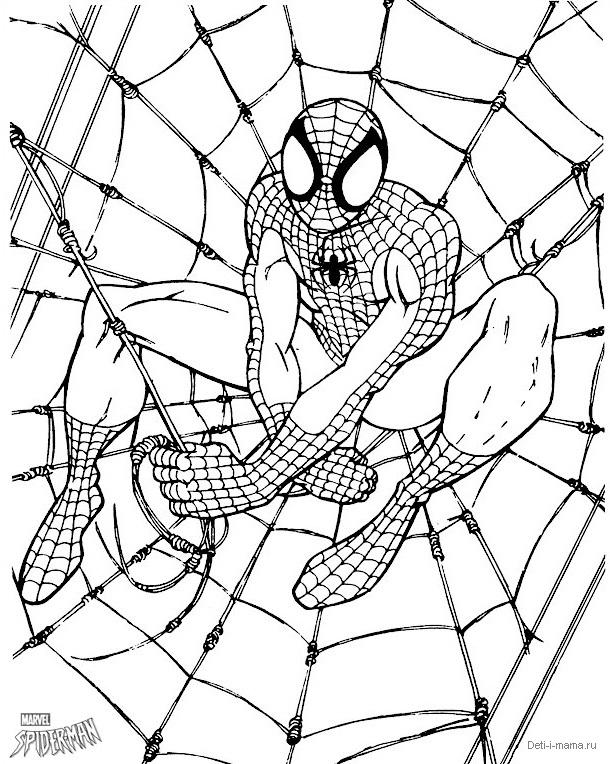 Человек-паук в паутине раскраска