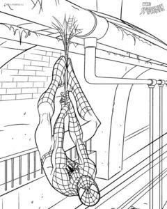 Разукрашка человека паука висящего на паутине в подвале ...
