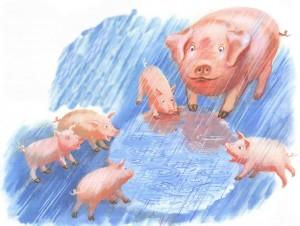 Свинья, поросята, дождь