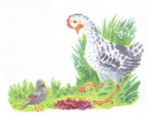 воробей и курица