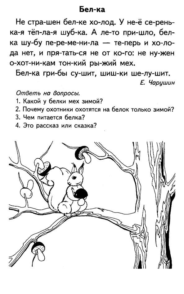 """""""Белка"""" Чарушин"""